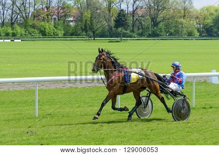 WROCLAW, POLAND - MAY 8: Finish the race for 3-year-old and older trotting French (sulki) on 8 May 2016 in Wroclaw, Poland. This is an annual race on the Partenice track open to the public.