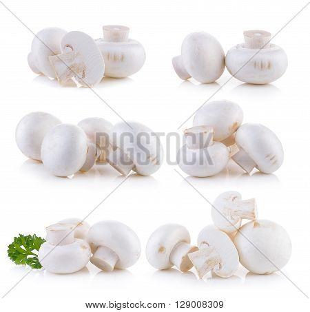 A Champignon mushroom on the white background