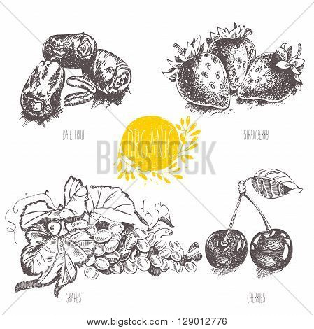 Series - vector fruit, vegetables and spices. Hand-drawn illustration in vintage style. Sketch. Healthy food. Linear graphic. Set of strawberry, cherry, date fruit, grapes.