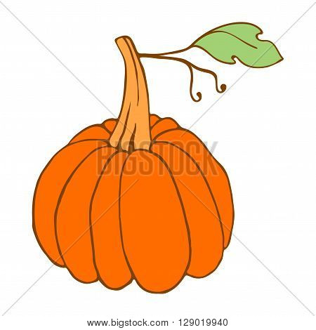Cute hand drawn pumpkin. Pumpkin vector icon. Pumpkin on white background. Isolated orange pumpkin. Pumpkin design element for food label. Orange pumpkin with green leaf.