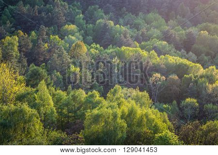 Green forest seen from the above in the spring, just before sunset