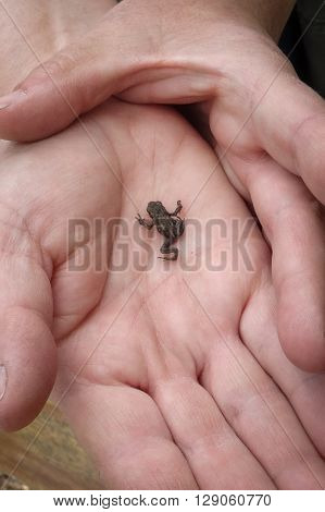 A baby frog on the palm of a hand