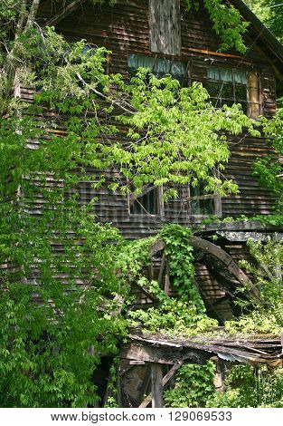 an old, abandoned grist mill, covered in ivy