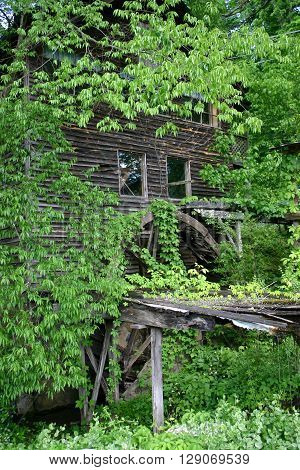 an abandoned grist mill, covered in ivy