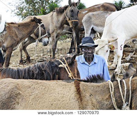 FOND BAPTISTE, HAITI -- FEBRUARY 29, 2016:  An unidentified Haitian senior man standing among large farm animals at the weekly Fond Baptiste, Haiti, market.
