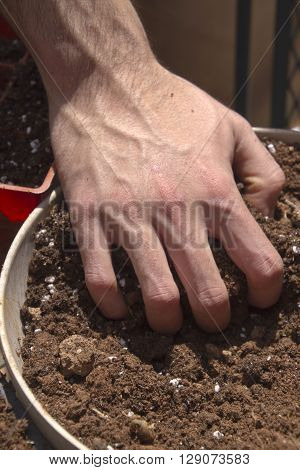 Close up of a young man getting his hands dirty while starting plants for a garden his fingers digging into a wood container filled with rich potting soil on a sunny spring day