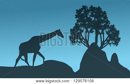 Silhouette of giraffe and rock at the night