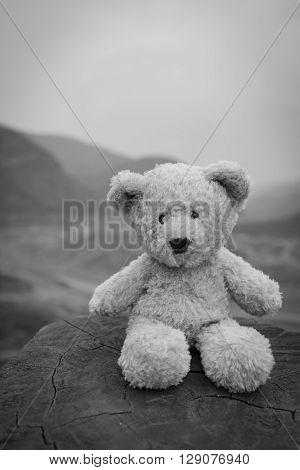 A teddy bear on an adventure, selective focus