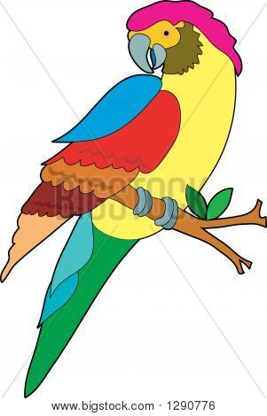 beautiful colorful parrot sitting on a branch poster