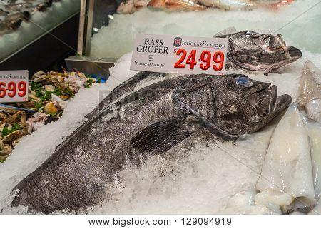 Sydney Australia - November 11 2014: Fresh Bass Groper fish and other seafood on the Famous Sydney Fish Market Sydney New South Wales Australia.. 52 tonnes of seafood are selling at auction on this market every day.