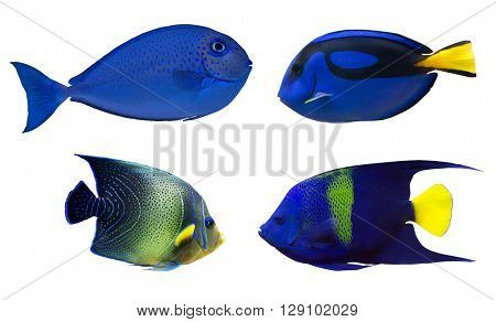set of blue fishes isolated on white background