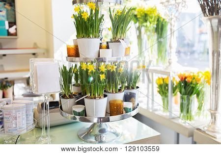 business, sale and floristry concept - narcissus flowers on stand at flower shop