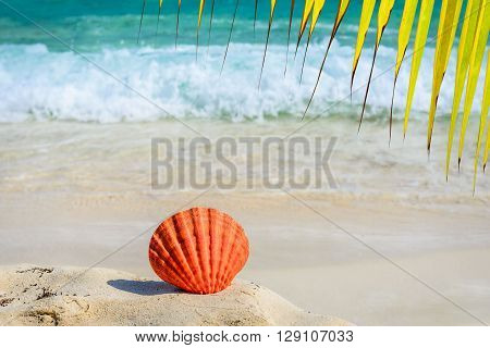 Palm tree leaves and orange seashell on sandy tropical beach