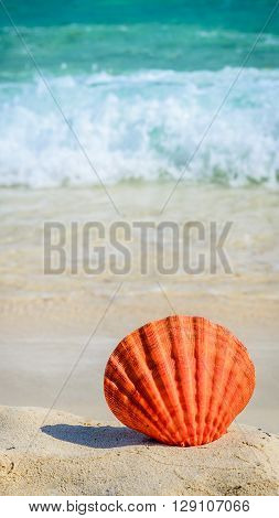 Big orange seashell on sandy tropical beach