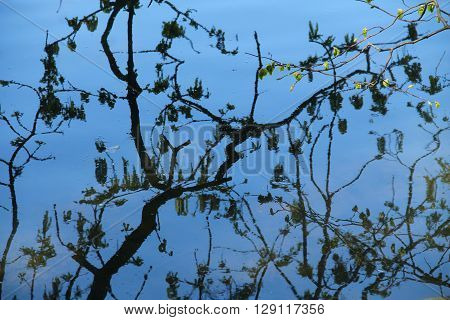 half abstract reflections of branches of trees on the calm water surface