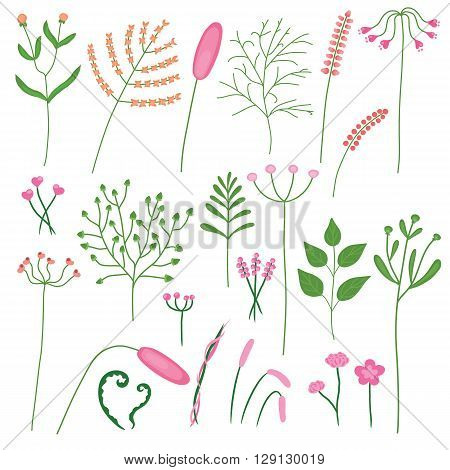 Drawing set of different plants and flowers in hand-drawn for decoration in your designs vector