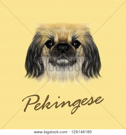 Vector Illustrated portrait of Pekingese dog. Cute fluffy face of Pekingese dog on yellow background