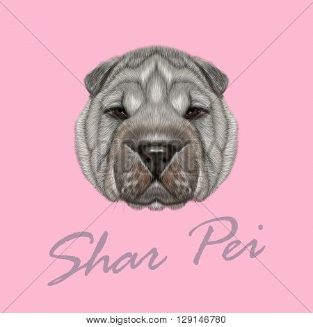 Vector Illustrated Portrait of Shar Pei dog. Cute silver wrinkly face of domestic dog on pink background.