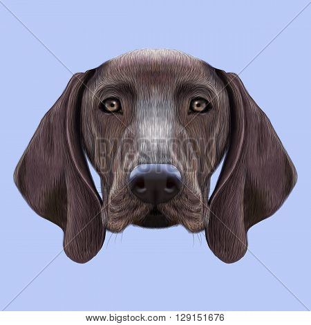 Illustrated portrait of German Shorthaired Pointer dog. Cute brown face of domestic dog on blue background