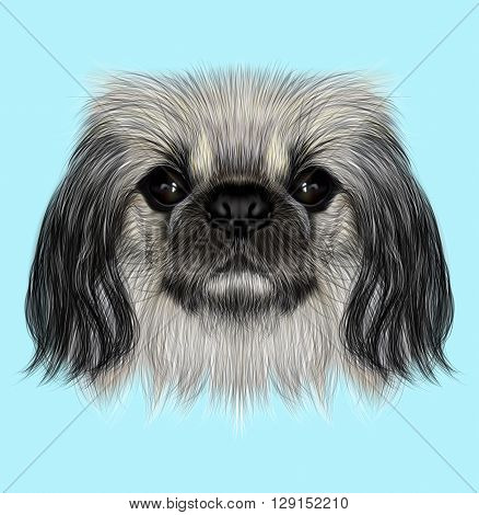 Illustrated portrait of Pekingese dog. Cute fluffy face of Pekingese dog on blue background