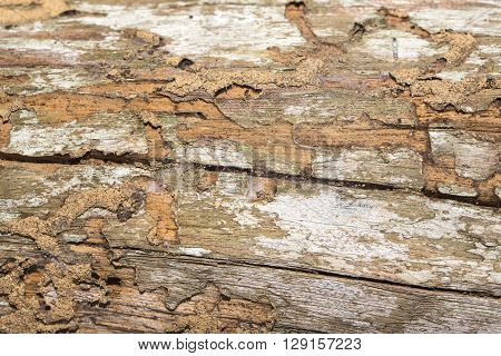 termite nest on wooden background house problem concept
