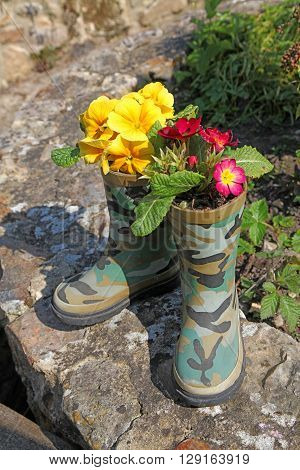 A novelty a pair of rubber boots planted with primroses sitting on a garden wall in the sunshine