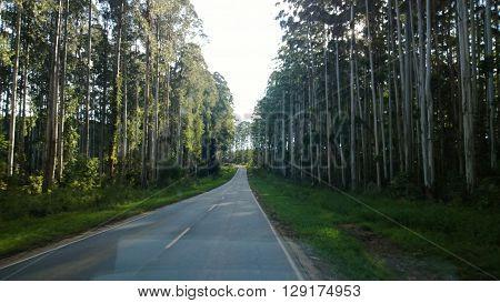 arvores, estrada, caminho, arvoredo, asfalto, eucaliptos, paisagem, corridas, Paraná, Brasil, entardecer