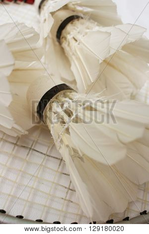 Shuttlecock and badminton racket on white background.
