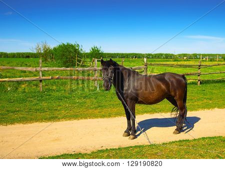 beautiful rural horse grazing near the road