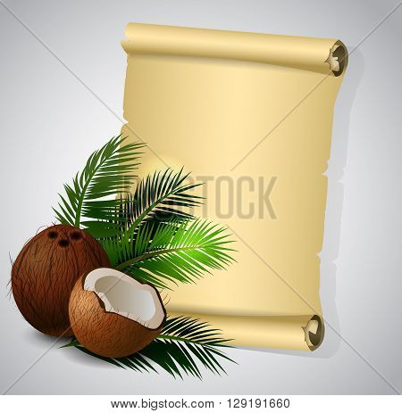 Coconut tropical nut fruit with cut vector illustration isolated with old grange paper roll