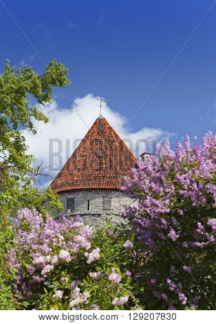 Medieval tower part of the city wall and the blossoming lilac