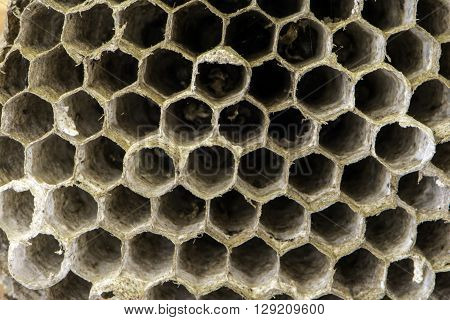 close up showing chambers of hornets nest