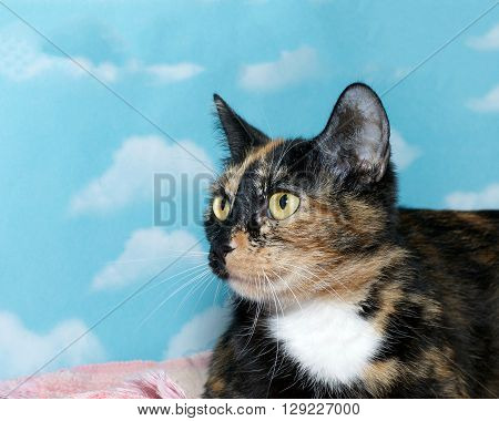 Side View Portrait Of Calico Tortie Mix Cat