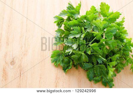 Organic italian flat leaf parsley ready to eat, closeup, selective focus.