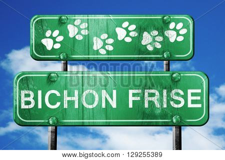 Bichon frise, 3D rendering, rough green sign with smooth lines