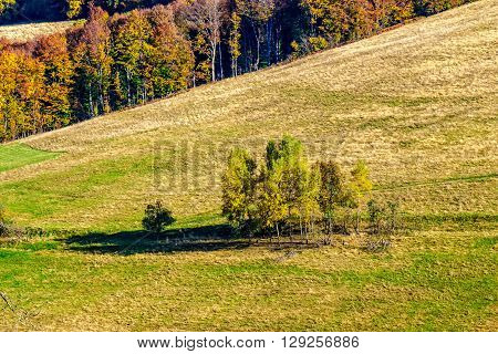 Yellow Trees On Hillside On Mountain Background At Sunrise