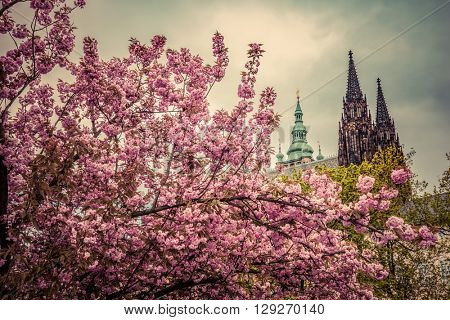 Prague Castle with St. Vitus Cathedral, Hradcany, Czech Republic as seen from spring gardens. Vintage, cloudy day