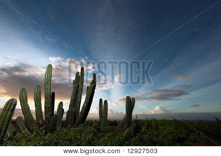 Cactus with Sunrise