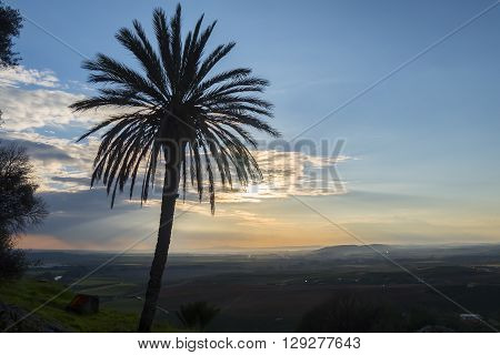 Sunset behind a palm tree, summer or spring