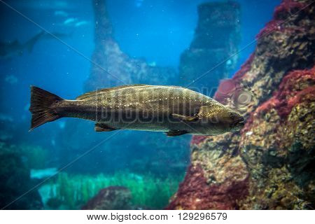 saltwater fish swimming in a large aquarium
