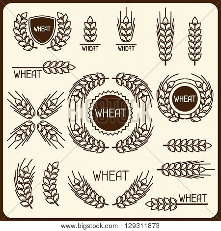 Design elements with wheat. Agricultural image natural ears of barley or rye. Objects for decoration bread packaging, beer labels.