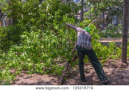 Bangkok Thailand - April 9 2016 : Unidentified worker chop the tree branch in park.