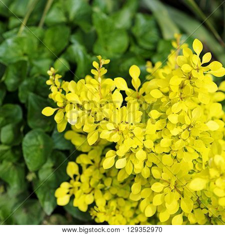 Tiny green and yellow pring leaves background
