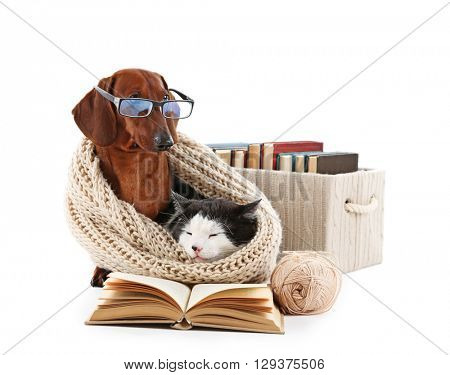 Cat and dachshund in knitted scarf with books, isolated on white.