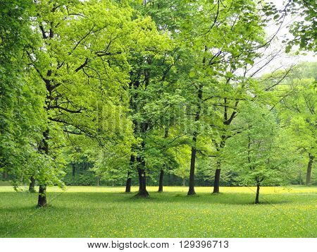 Beautiful spring greenish forest landscape image PHTOGRAPHY