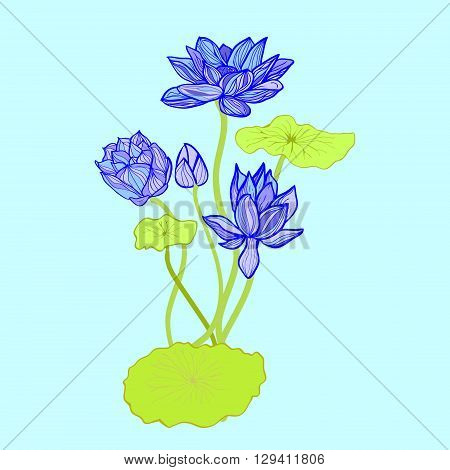 Hand drawn style design element. Vector illustration background of Beautiful hand drawn lotus flowers and leaves.