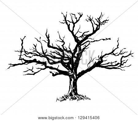 drawing a big old sprawling dry tree graphic ink isolate sketch vector illustration