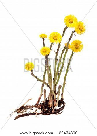 green plant on a white background isolated