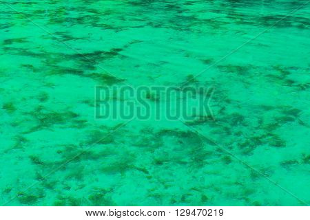 Khao Pra Bang Khram Wildlife Sanctuary surface of Emerald Pool aka Sa Morakot tourist destination. National Park Krabi Thailand. Green color tropical lake Southeast Asia
