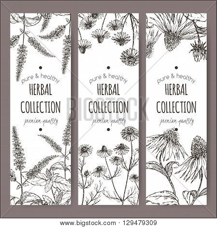 Set of 3 vector herbal tea labels with peppermint, chamomile and echinacea on hand drawn sketch. Placed on white background.